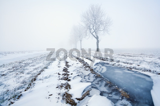 frozen puddle and misty morning