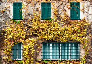 Old building with yellowed ivy and green windows