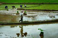 Reisarbeiter im Norden von Laos