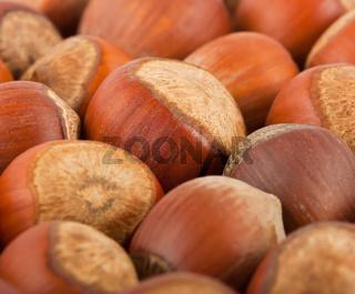 background of the hazelnuts
