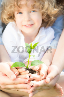 Young tree in hands