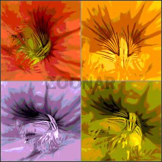 Kapuzinerblüten