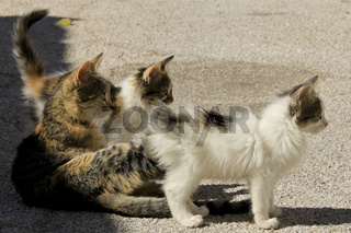 neugierige Katzenfamilie