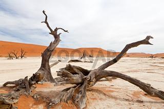 Tote Bäume im Death Vlei (Namib Wüste-Namibia)