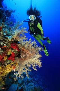 Taucherin mit Weichkorallen, Scuba diver and beautyful corals