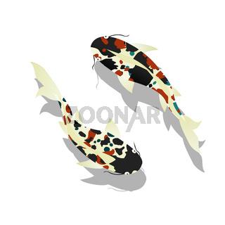 Carp. Koi Fish.