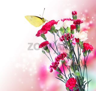 Pink Carnation with Butterfly