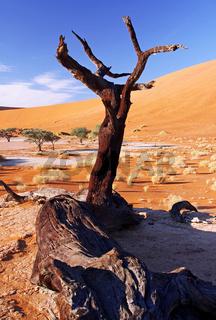 Dead Vlei, Namib-Wüste Namibia, Namib-Desert