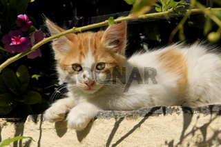 Katzenbaby beim Sonnenbaden