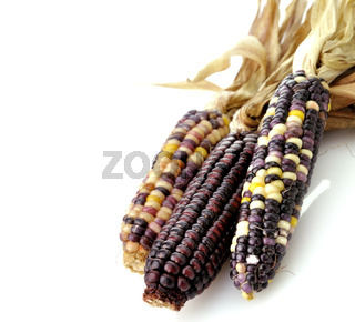 Colorful Dry Corn