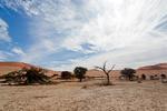 Oasen in der Wüste Namib