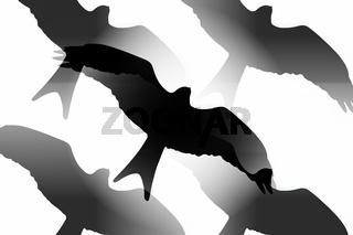 Raubvogel, Silhouette
