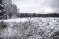 Winter field under