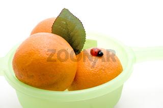 Orangen mit Marienkäfer
