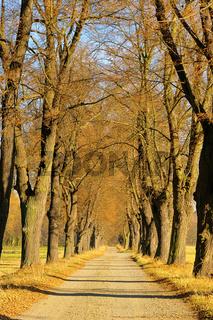 Lindenallee - lime tree avenue 04