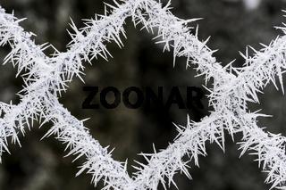 Winterzauber am Gartenzaun