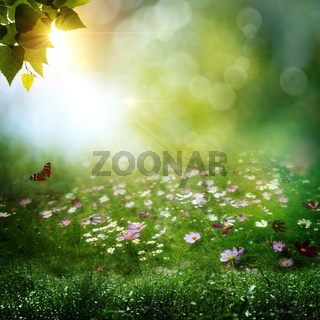 Early morning in the deep forest. Abstract natural backgrounds