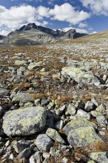 Blick zum Berg Storstyggesvanatinden im Tal Svanadalen, Dovrefjell-Sunndalsfjella Nationalpark, Oppland