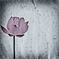 lotus flower old grunge paper texture