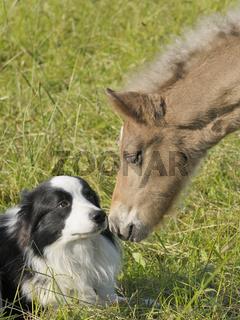 Fohlen und Hund
