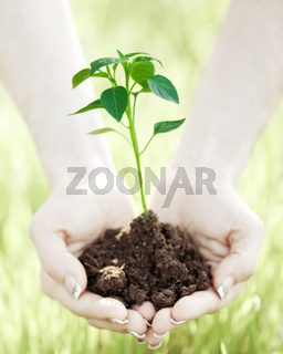 Person hands holding young plant