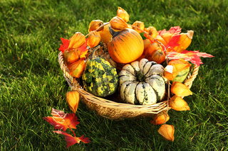 Pumpkins in the grass for Thanksgiving