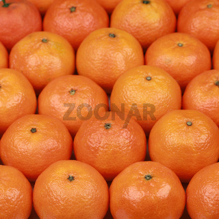 Frisch geerntete Mandarinen