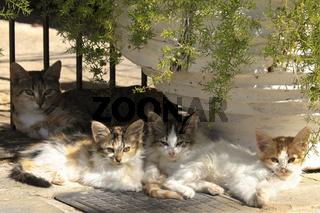 Katzenfamilie im Halbschatten