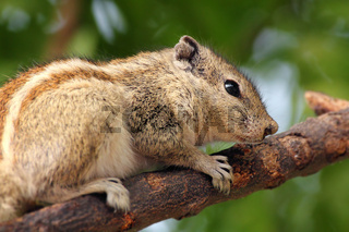 chipmunk sitting on tree branch