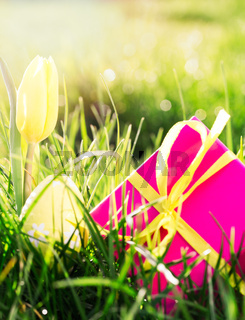 Pink gift box with yellow easter egg and yellow tulip