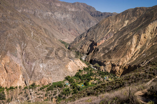 Oasis in the colca canyon