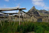 Holzgestelle für Stockfisch in Hamnoy