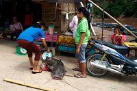 Fischer in Laos