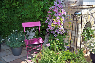 rosa Clematis und pinker Gartenstuhl