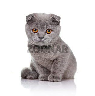 Little lop-eared kitten isolated on white