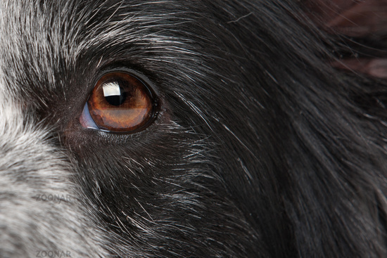 close-up dog eye