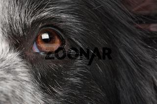 close-up dog eye