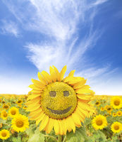 smiling face of sunflower at summer time