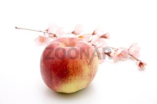 Roter Apfel mit Blüten