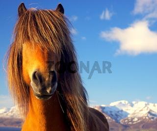 Hippie Horse