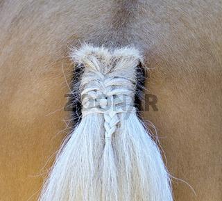 Hinteransicht eines Pferdes mit geflochtenem Schweif