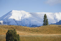 Wanaka Region