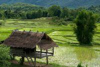 Reisfeld bei Luang Prabang