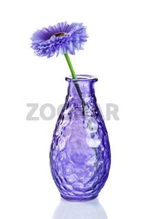 Blue flower in vase isolated on white