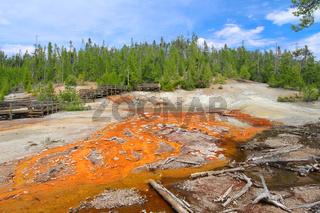 Echinus Geyser Yellowstone