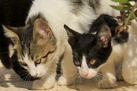 Hungrige Katzen in Griechenland
