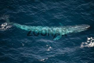 Blauwal, Luftbild, Vogelperspektive, unterweaaser