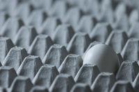 White chicken egg on molded pulp carton