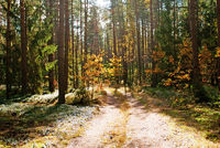 Autumn forest road in the sunlight
