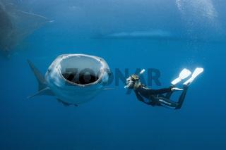 Walhai und Schnorchlerin